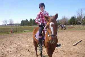 Large pony mare for part board