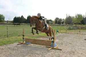 Appendix gelding available for part board