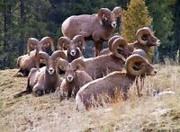 BIG HORN, MOUNTAINS and LAKES / Radium RV Lots Available