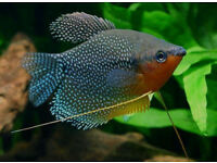 QUALITY TROPICAL FISH FOR SALE