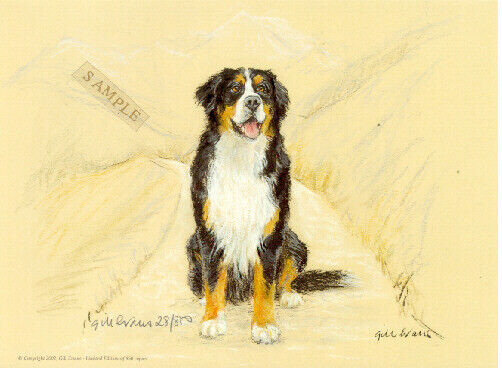 Bernese Mountain Dog Limited Edition Art Print by UK Artist Gill Evans*