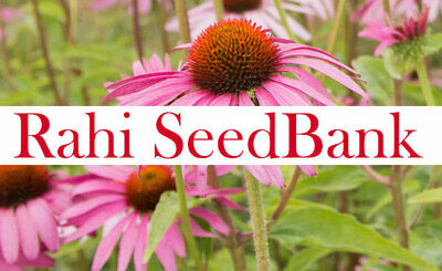 Echinacea Purpurea 35 Seeds Coneflower Medicinal Herb Wounds Burns Insect Bites Echinacea Purpurea Echinacea Medicine