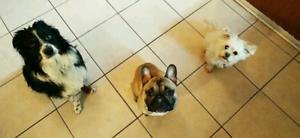 Dog Boarding(short & long-term care)