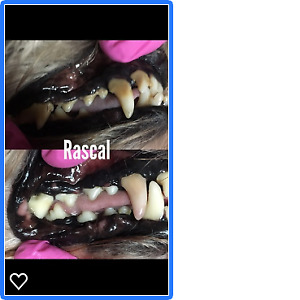 MOBILE COSMETIC TEETH CLEANING FOR CATS AND DOGS