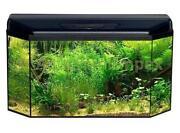 Aquarium 80