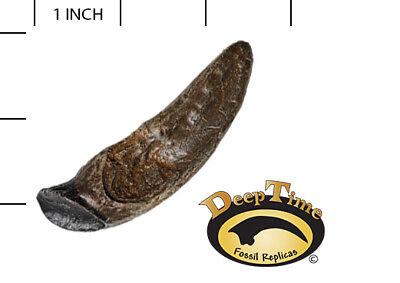 Protoceratops Tooth - Cast Replica, Dinosaur Tooth (SN19)