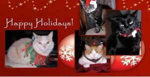 Pleas for Paws Cats Christmas Auction St. John's Newfoundland image 1