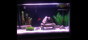 29 gallon fish tank, Heater, filter, rocks and white sand