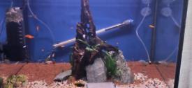 Aqua one aquarium with cabinet