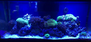 Live Rock $3/pound (Saltwater Marine Reef Aquarium)
