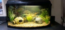 Tropical Aquarium - Complete Set Up