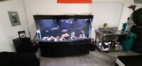 Re-home or Purchase Malawi Cichlids