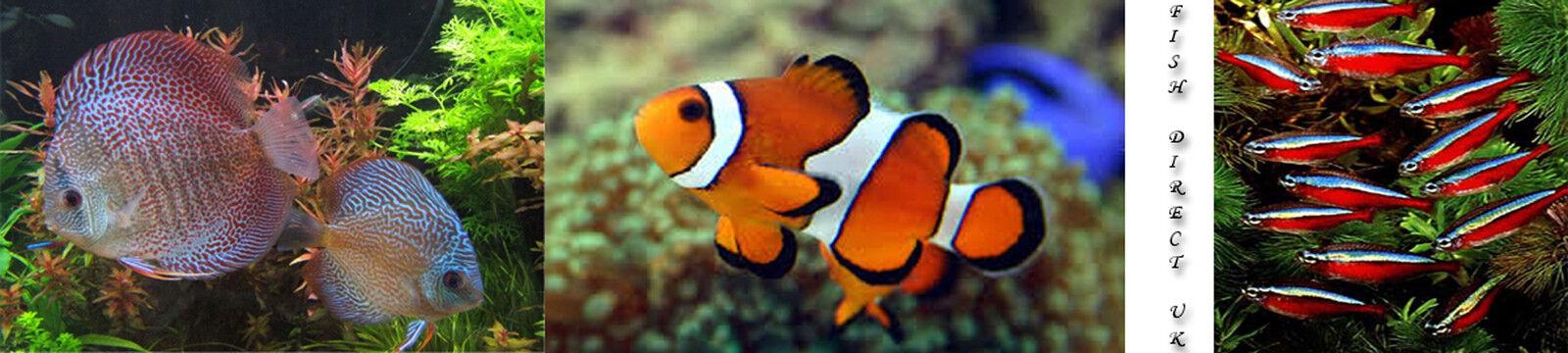 fishdirectuk