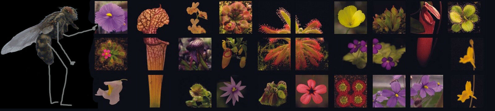 Carnivorous plants and seeds