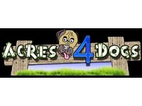 DRIVER /DOG DAY CARE ASSISTANT (a permanent full-time job / Monday - Friday)