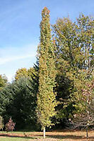 Trees and shrubs for sale Airdrie