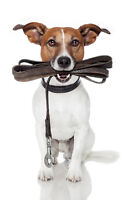 Experienced Dog Walker - Affordable rates
