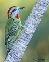 Voyage CUBA Circuit photographie et observation d'oiseaux