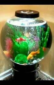 Biorb 105 aquarium fish tank