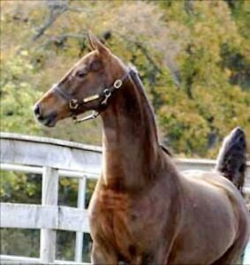 Beautiful mare available for on property lease