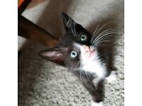 Cute male kitten