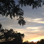 Forest Valley Finds