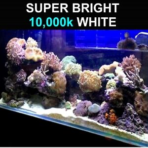 LED Light Strip 10,000k Super Bright Aquarium