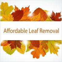 LEAF REMOVAL AND YARD CLEAN UP
