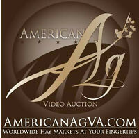 HAY FOR SALE! LIVE, VIDEO, ONLINE, AUCTION!