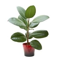 $50 to deliver plant in cube van or moving truck