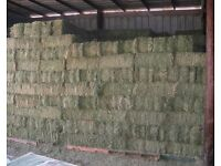 Quality Timothy Hay Bales