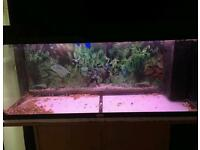 180 litre set up must see