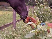 Pest Control-Mole Catcher-Wasp Nest Removal, fast response at surreywaspandmole