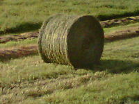 800 lb round bales suitable for Cattle, Sheep, Llamas
