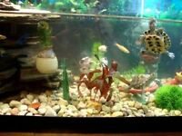 Fish tank and turtle ***