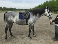 OBO-Full Tack Set all included