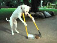 DOG POOP/SPRING CLEAN UP