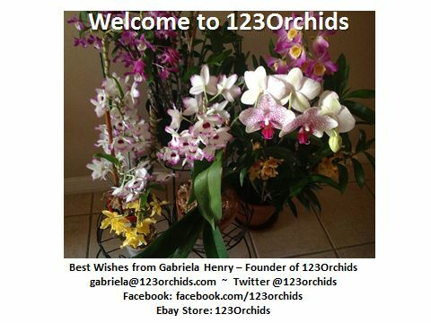 123Orchids
