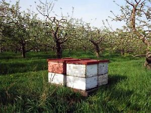 I have bees. Do you have an orchard?