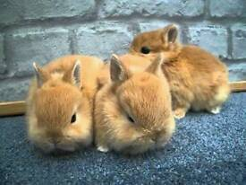 Baby rabbits ONLY 2 LEFT