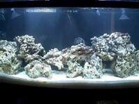 Live rock - marine aquarium