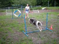 AGILITY FUN DAY, SATURDAY 15TH AUGUST