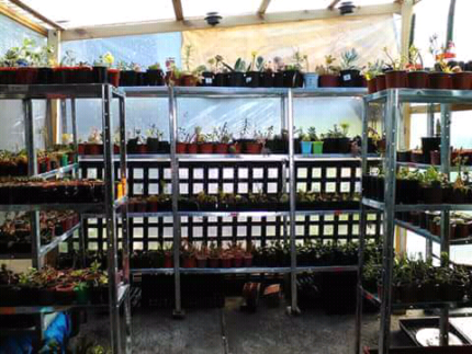 Succulents and Cacti clearance sale.