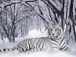 TigerWillowCreations