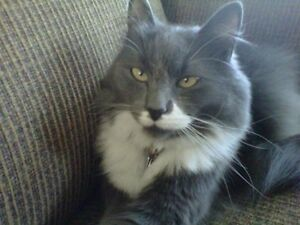 MISSING CAT- eastern passage