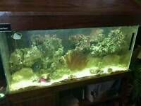 4ft fish tank with brand new sump
