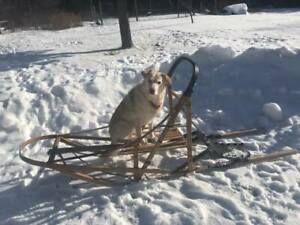 Dog Sled - Mushing accessories