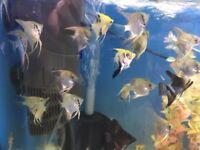 Tropical Fish Job Lot