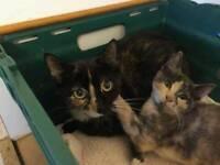 RESCUE CATS: Mum Lucy & daughter Lea