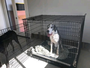 XL Cage Style Dog Kennel